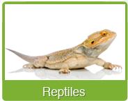 Reptiles